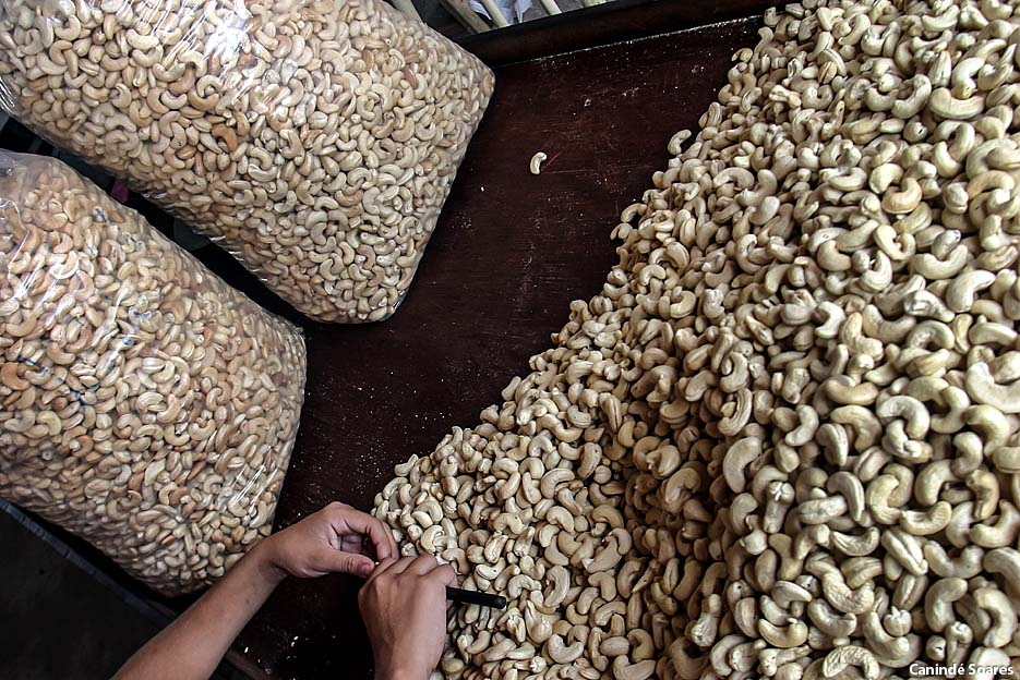 Empresa retoma produção de castanhas de caju e gera empregos em São Paulo do Potengi