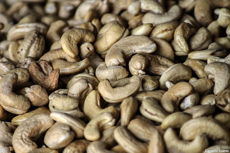 Empresa potiguar inicia exportações de castanhas de caju para os EUA