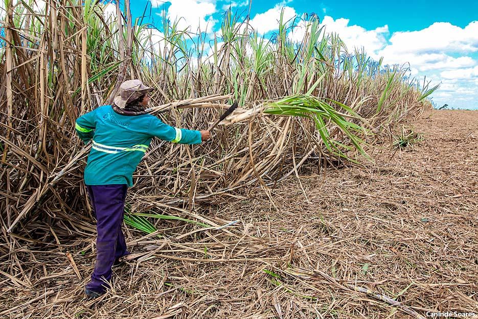 EMPARN orienta técnicos do SENAR/RN sobre estratégias de combate ao pulgão-amarelo da cana-de-açúcar